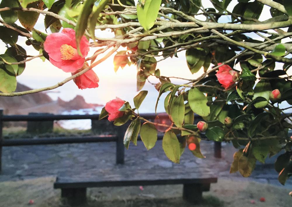 椿の展望台